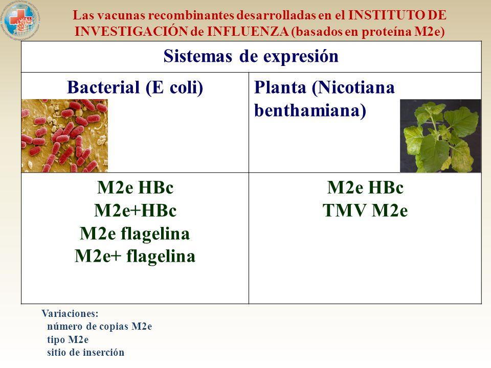 Las vacunas recombinantes desarrolladas en el INSTITUTO DE INVESTIGACIÓN de INFLUENZA (basados en proteína M2e) Sistemas de expresión Bacterial (E coli)Planta (Nicotiana benthamiana) M2e HBc M2e+HBc M2e flagelina M2e+ flagelina M2e HBc TMV М2е Variaciones: número de copias М2е tipo М2е sitio de inserción