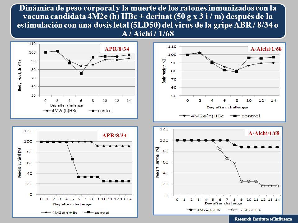 Dinámica de peso corporal y la muerte de los ratones inmunizados con la vacuna candidata 4M2e (h) HВc + derinat (50 g x 3 i / m) después de la estimulación con una dosis letal (5LD50) del virus de la gripe ABR / 8/34 o A / Aichi / 1/68 APR/8/34 A/Aichi/1/68 Research Institute of Influenza