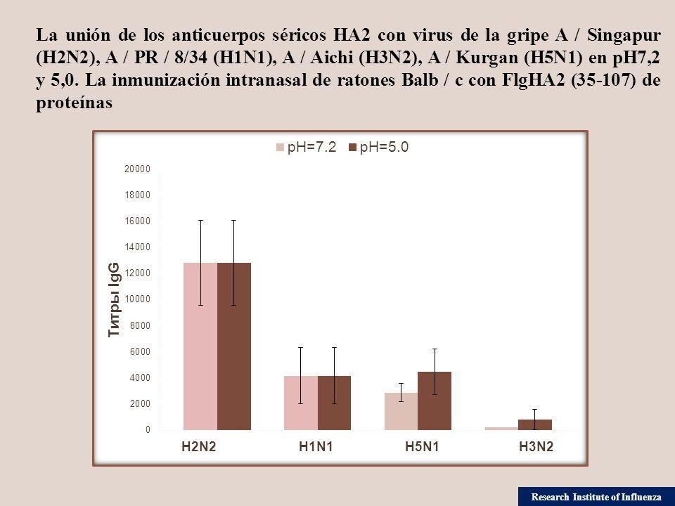 La unión de los anticuerpos séricos НА2 con virus de la gripe A / Singapur (H2N2), A / PR / 8/34 (H1N1), A / Aichi (H3N2), A / Kurgan (H5N1) en рН7,2 y 5,0.