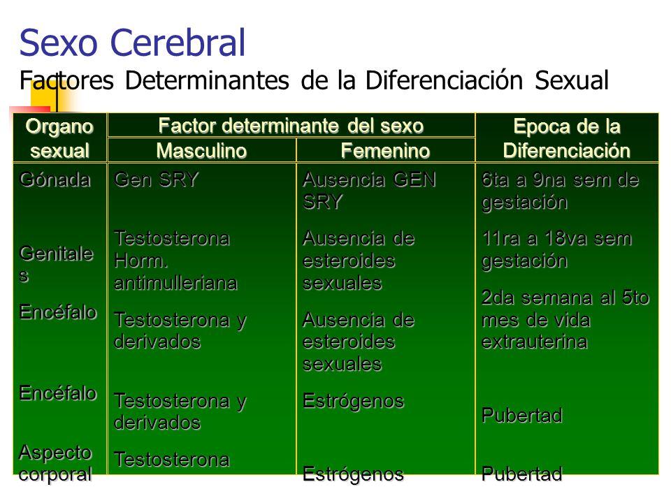 Sexo Cerebral Factores Determinantes de la Diferenciación Sexual Organo sexual Epoca de la Diferenciación Gónada Genitale s EncéfaloEncéfalo Aspecto corporal Gen SRY Testosterona Horm.