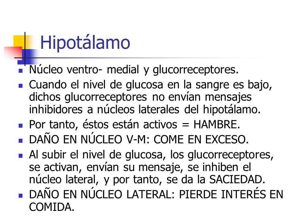 Hipotálamo Núcleo ventro- medial y glucorreceptores.