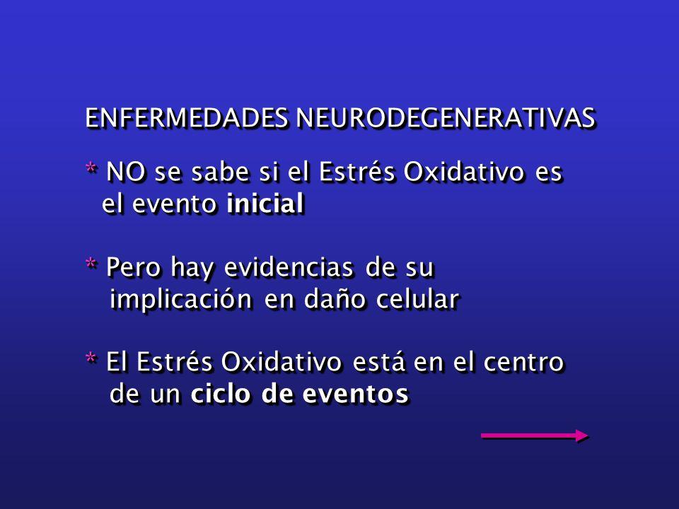 ENFERMEDADES NEURODEGENERATIVAS * NO se sabe si el Estrés Oxidativo es el evento inicial el evento inicial * Pero hay evidencias de su implicación en daño celular implicación en daño celular * El Estrés Oxidativo está en el centro de un ciclo de eventos de un ciclo de eventos ENFERMEDADES NEURODEGENERATIVAS * NO se sabe si el Estrés Oxidativo es el evento inicial el evento inicial * Pero hay evidencias de su implicación en daño celular implicación en daño celular * El Estrés Oxidativo está en el centro de un ciclo de eventos de un ciclo de eventos