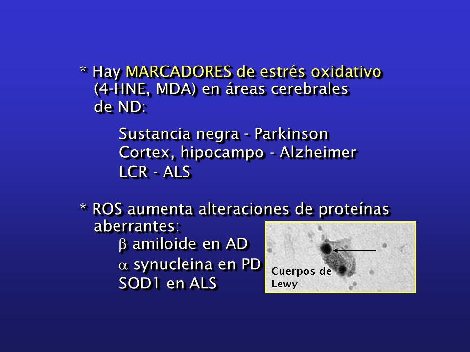 * Hay MARCADORES de estrés oxidativo (4-HNE, MDA) en áreas cerebrales (4-HNE, MDA) en áreas cerebrales de ND: de ND: Sustancia negra - Parkinson Sustancia negra - Parkinson Cortex, hipocampo - Alzheimer Cortex, hipocampo - Alzheimer LCR - ALS LCR - ALS * ROS aumenta alteraciones de proteínas aberrantes: aberrantes:  amiloide en AD  synucleina en PD SOD1 en ALS SOD1 en ALS * Hay MARCADORES de estrés oxidativo (4-HNE, MDA) en áreas cerebrales (4-HNE, MDA) en áreas cerebrales de ND: de ND: Sustancia negra - Parkinson Sustancia negra - Parkinson Cortex, hipocampo - Alzheimer Cortex, hipocampo - Alzheimer LCR - ALS LCR - ALS * ROS aumenta alteraciones de proteínas aberrantes: aberrantes:  amiloide en AD  synucleina en PD SOD1 en ALS SOD1 en ALS Cuerpos de Lewy