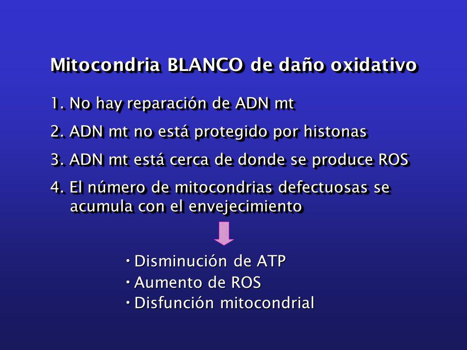 Mitocondria BLANCO de daño oxidativo 1. No hay reparación de ADN mt 2.