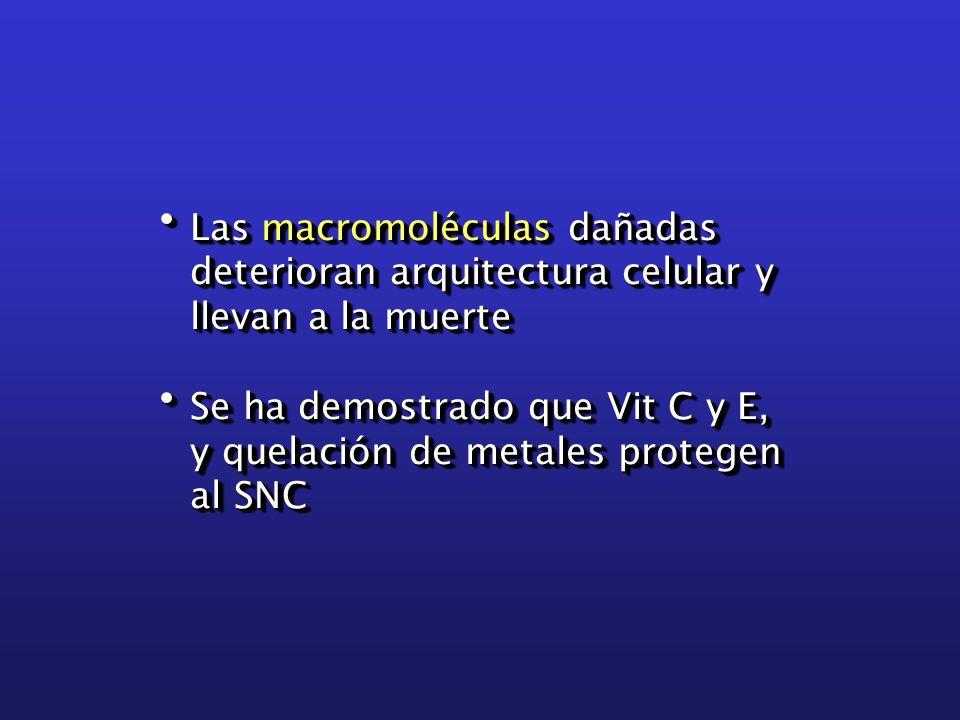 Las macromoléculas dañadas Las macromoléculas dañadas deterioran arquitectura celular y deterioran arquitectura celular y llevan a la muerte llevan a la muerte Se ha demostrado que Vit C y E, Se ha demostrado que Vit C y E, y quelación de metales protegen y quelación de metales protegen al SNC al SNC Las macromoléculas dañadas Las macromoléculas dañadas deterioran arquitectura celular y deterioran arquitectura celular y llevan a la muerte llevan a la muerte Se ha demostrado que Vit C y E, Se ha demostrado que Vit C y E, y quelación de metales protegen y quelación de metales protegen al SNC al SNC