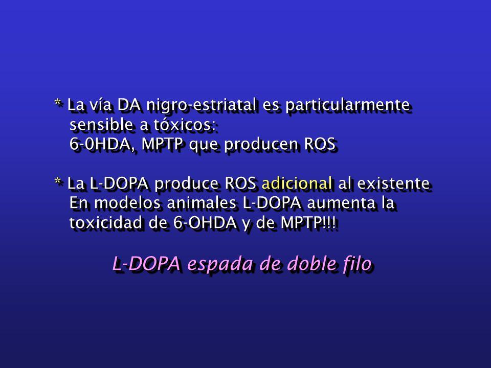 * La vía DA nigro-estriatal es particularmente sensible a tóxicos: sensible a tóxicos: 6-0HDA, MPTP que producen ROS 6-0HDA, MPTP que producen ROS * La L-DOPA produce ROS adicional al existente En modelos animales L-DOPA aumenta la En modelos animales L-DOPA aumenta la toxicidad de 6-OHDA y de MPTP!!.