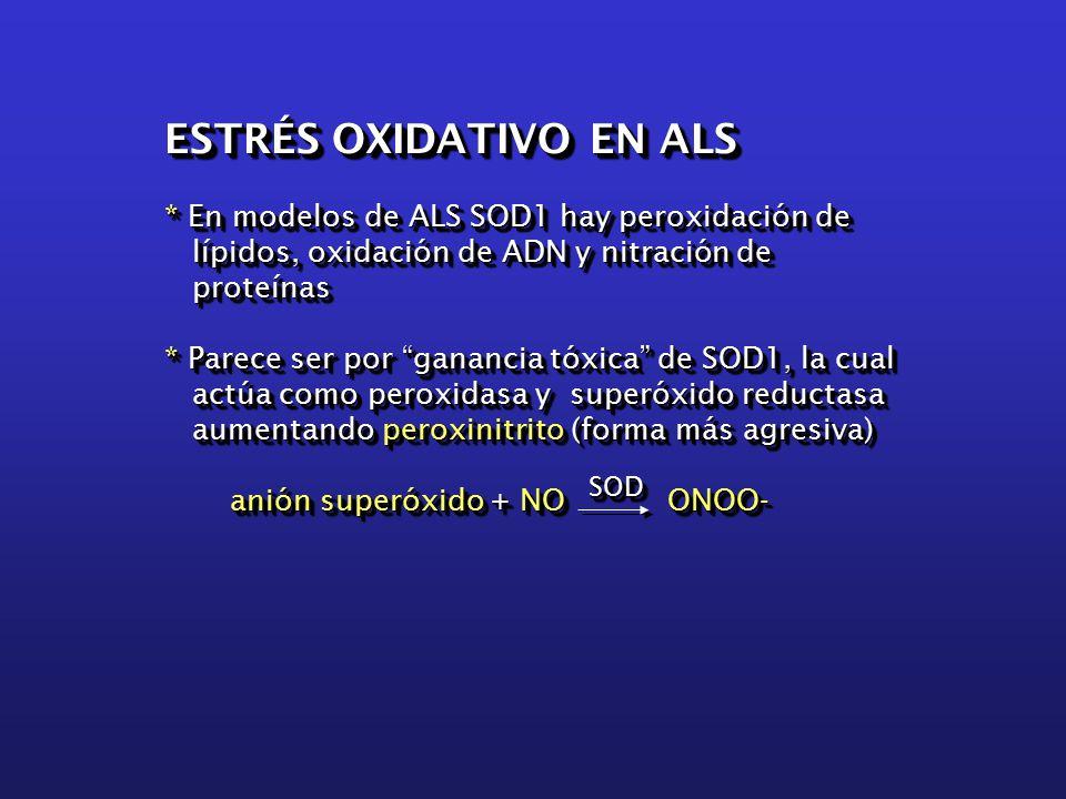 ESTRÉS OXIDATIVO EN ALS * En modelos de ALS SOD1 hay peroxidación de lípidos, oxidación de ADN y nitración de lípidos, oxidación de ADN y nitración de proteínas proteínas * Parece ser por ganancia tóxica de SOD1, la cual actúa como peroxidasa y superóxido reductasa actúa como peroxidasa y superóxido reductasa aumentando peroxinitrito (forma más agresiva) aumentando peroxinitrito (forma más agresiva) anión superóxido + NO ONOO- anión superóxido + NO ONOO- ESTRÉS OXIDATIVO EN ALS * En modelos de ALS SOD1 hay peroxidación de lípidos, oxidación de ADN y nitración de lípidos, oxidación de ADN y nitración de proteínas proteínas * Parece ser por ganancia tóxica de SOD1, la cual actúa como peroxidasa y superóxido reductasa actúa como peroxidasa y superóxido reductasa aumentando peroxinitrito (forma más agresiva) aumentando peroxinitrito (forma más agresiva) anión superóxido + NO ONOO- anión superóxido + NO ONOO-SODSOD