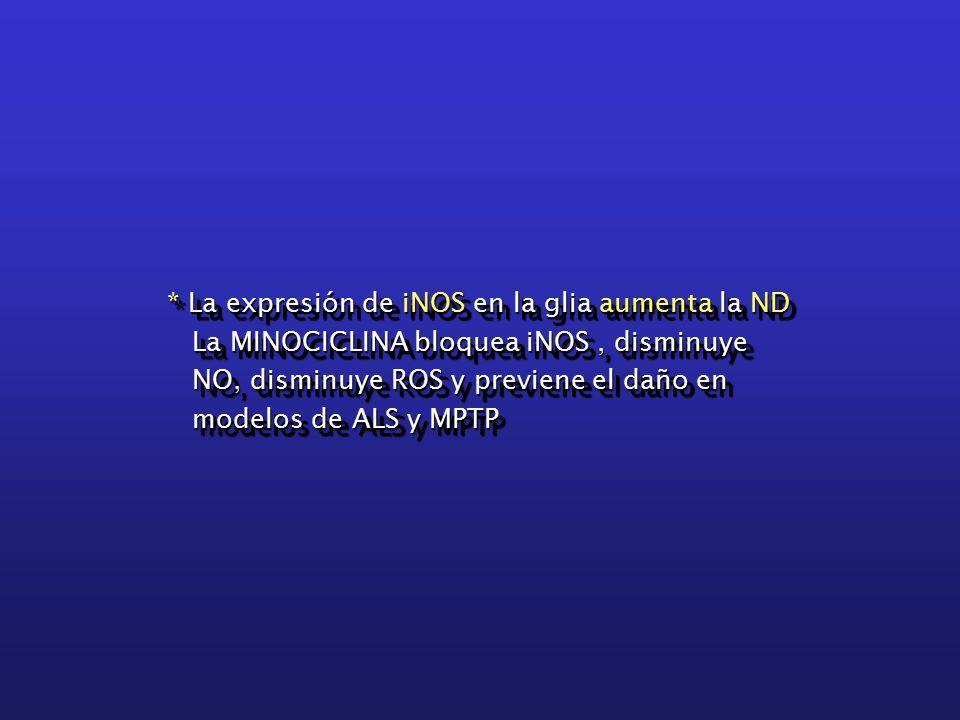 * La expresión de iNOS en la glia aumenta la ND La MINOCICLINA bloquea iNOS, disminuye La MINOCICLINA bloquea iNOS, disminuye NO, disminuye ROS y previene el daño en NO, disminuye ROS y previene el daño en modelos de ALS y MPTP modelos de ALS y MPTP * La expresión de iNOS en la glia aumenta la ND La MINOCICLINA bloquea iNOS, disminuye La MINOCICLINA bloquea iNOS, disminuye NO, disminuye ROS y previene el daño en NO, disminuye ROS y previene el daño en modelos de ALS y MPTP modelos de ALS y MPTP