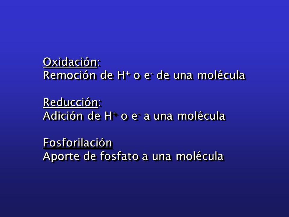 Oxidación: Remoción de H + o e - de una molécula Reducción: Adición de H + o e - a una molécula Fosforilación Aporte de fosfato a una molécula Oxidación: Remoción de H + o e - de una molécula Reducción: Adición de H + o e - a una molécula Fosforilación Aporte de fosfato a una molécula