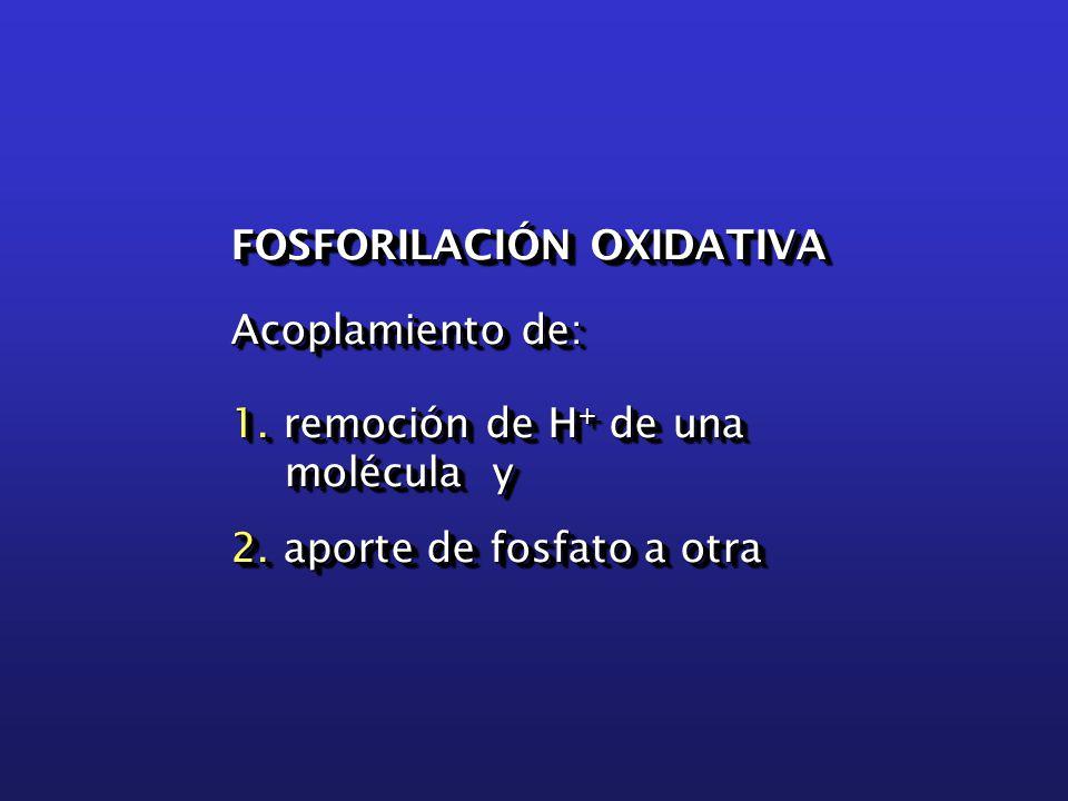 FOSFORILACIÓN OXIDATIVA Acoplamiento de: 1. remoción de H + de una molécula y 2.