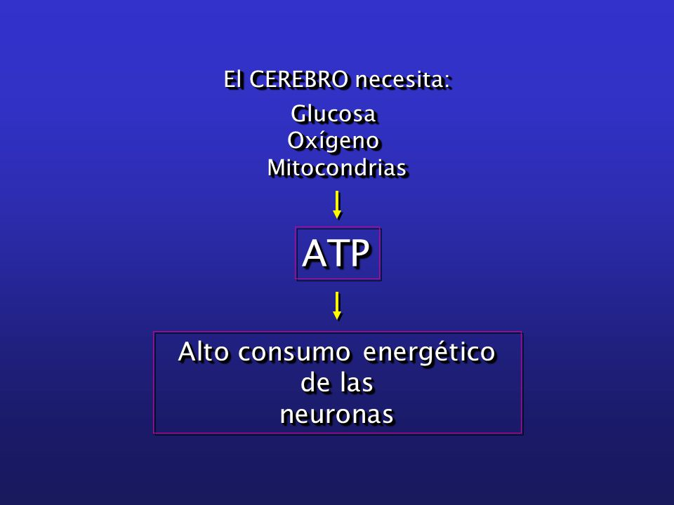 El CEREBRO necesita: Glucosa Oxígeno OxígenoMitocondrias El CEREBRO necesita: Glucosa Oxígeno OxígenoMitocondrias ATPATP Alto consumo energético de las neuronas neuronas