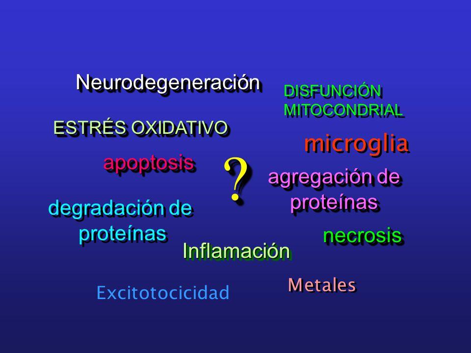 ESTRÉS OXIDATIVO NeurodegeneraciónNeurodegeneración apoptosisapoptosis agregación de proteínas proteínas necrosisnecrosis InflamaciónInflamación DISFUNCIÓN MITOCONDRIAL DISFUNCIÓN MITOCONDRIAL degradación de proteínas degradación de proteínas .