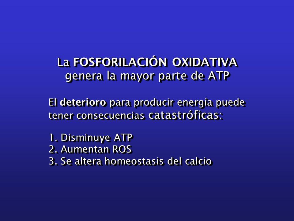 La FOSFORILACIÓN OXIDATIVA genera la mayor parte de ATP El deterioro para producir energía puede tener consecuencias catastróficas: 1.