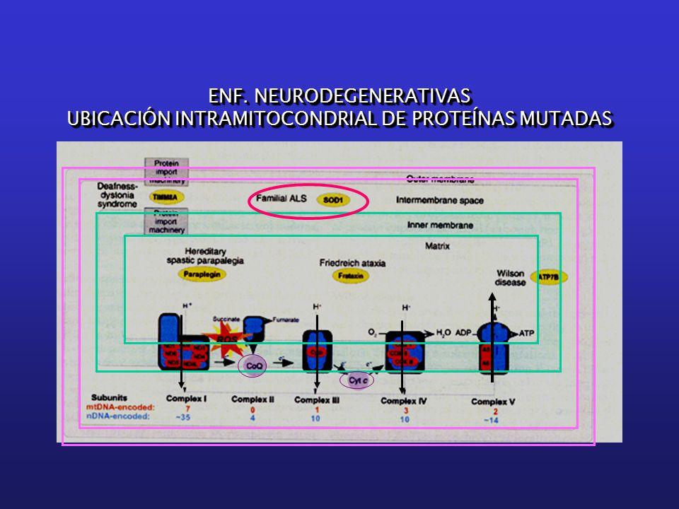 ENF. NEURODEGENERATIVAS UBICACIÓN INTRAMITOCONDRIAL DE PROTEÍNAS MUTADAS ENF.