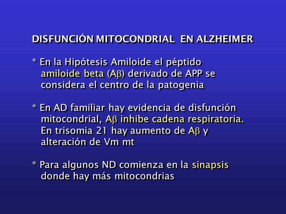 DISFUNCIÓN MITOCONDRIAL EN ALZHEIMER * En la Hipótesis Amiloide el péptido amiloide beta (A  ) derivado de APP se considera el centro de la patogenia * En AD familiar hay evidencia de disfunción mitocondrial, A  inhibe cadena respiratoria.