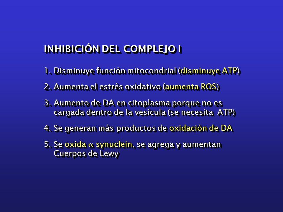 INHIBICIÓN DEL COMPLEJO I 1. Disminuye función mitocondrial (disminuye ATP) 2.