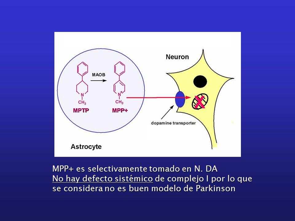 MPP+ es selectivamente tomado en N.