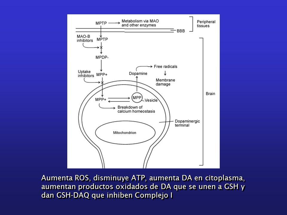 Aumenta ROS, disminuye ATP, aumenta DA en citoplasma, aumentan productos oxidados de DA que se unen a GSH y dan GSH-DAQ que inhiben Complejo I