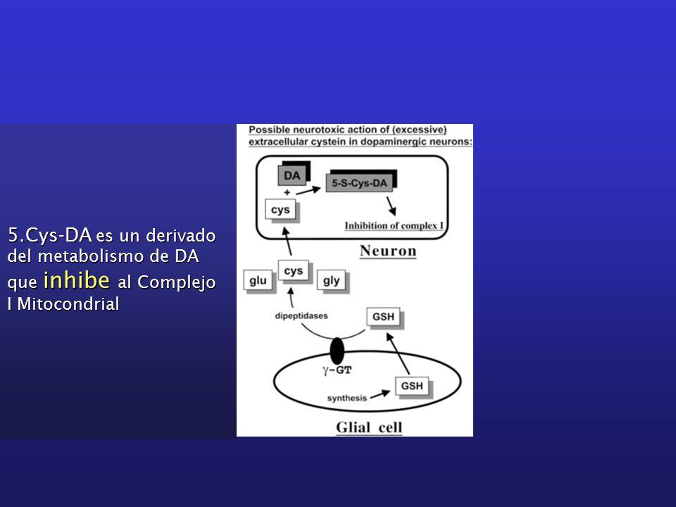 5.Cys-DA es un derivado del metabolismo de DA que inhibe al Complejo I Mitocondrial