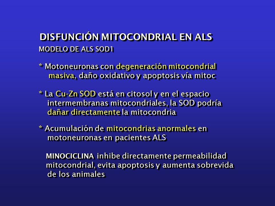 MODELO DE ALS SOD1 * Motoneuronas con degeneración mitocondrial masiva, daño oxidativo y apoptosis vía mitoc masiva, daño oxidativo y apoptosis vía mitoc * La Cu-Zn SOD está en citosol y en el espacio intermembranas mitocondriales, la SOD podría dañar directamente la mitocondria * Acumulación de mitocondrias anormales en motoneuronas en pacientes ALS MINOCICLINA inhibe directamente permeabilidad MINOCICLINA inhibe directamente permeabilidad mitocondrial, evita apoptosis y aumenta sobrevida de los animales mitocondrial, evita apoptosis y aumenta sobrevida de los animales MODELO DE ALS SOD1 * Motoneuronas con degeneración mitocondrial masiva, daño oxidativo y apoptosis vía mitoc masiva, daño oxidativo y apoptosis vía mitoc * La Cu-Zn SOD está en citosol y en el espacio intermembranas mitocondriales, la SOD podría dañar directamente la mitocondria * Acumulación de mitocondrias anormales en motoneuronas en pacientes ALS MINOCICLINA inhibe directamente permeabilidad MINOCICLINA inhibe directamente permeabilidad mitocondrial, evita apoptosis y aumenta sobrevida de los animales mitocondrial, evita apoptosis y aumenta sobrevida de los animales DISFUNCIÓN MITOCONDRIAL EN ALS