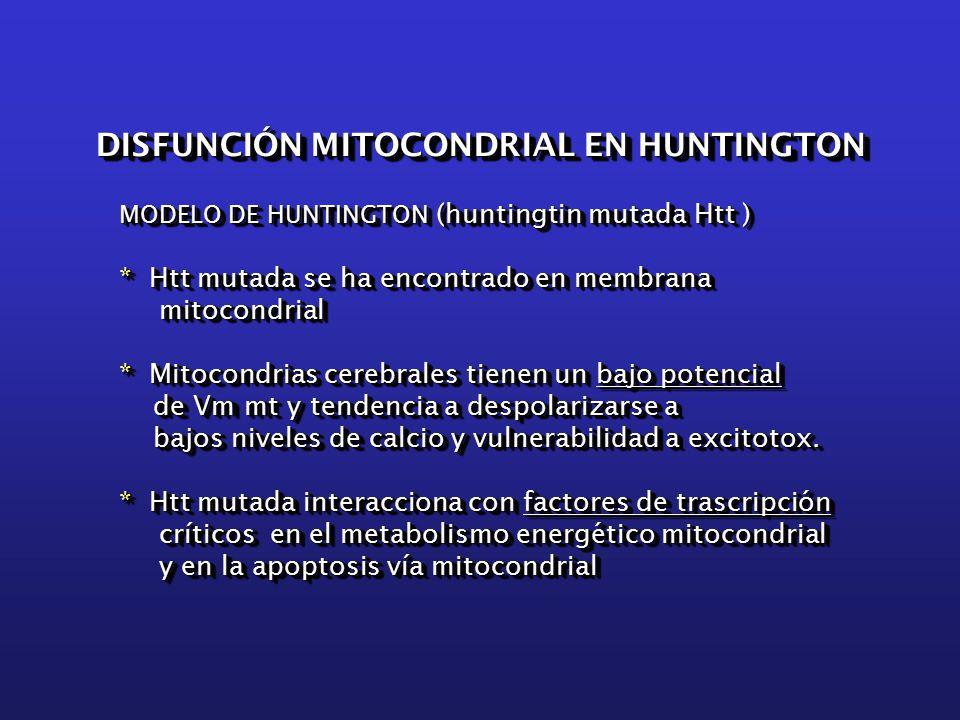 MODELO DE HUNTINGTON (huntingtin mutada Htt ) * Htt mutada se ha encontrado en membrana mitocondrial * Mitocondrias cerebrales tienen un bajo potencial de Vm mt y tendencia a despolarizarse a de Vm mt y tendencia a despolarizarse a bajos niveles de calcio y vulnerabilidad a excitotox.