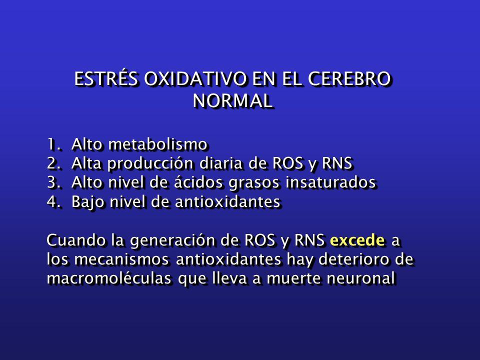 ESTRÉS OXIDATIVO EN EL CEREBRO NORMAL 1. Alto metabolismo 2.