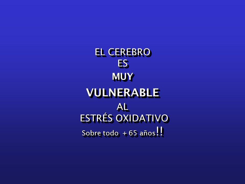 EL CEREBRO ESMUYVULNERABLEAL ESTRÉS OXIDATIVO ESTRÉS OXIDATIVO Sobre todo + 65 años !.