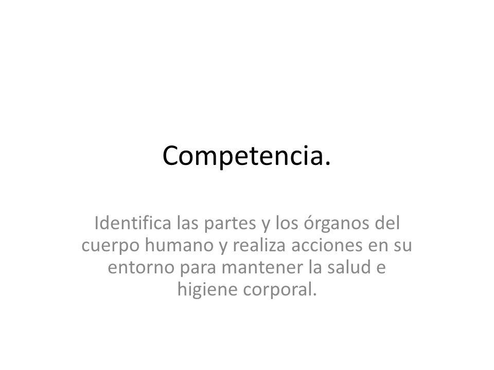 Competencia. Identifica las partes y los órganos del cuerpo humano y realiza acciones en su entorno para mantener la salud e higiene corporal.