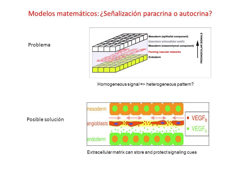 Modelos matemáticos: ¿Señalización paracrina o autocrina.