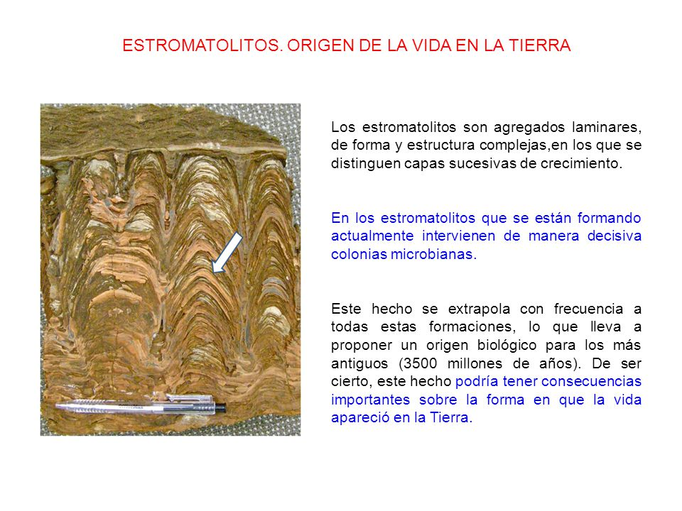 Los estromatolitos son agregados laminares, de forma y estructura complejas,en los que se distinguen capas sucesivas de crecimiento.