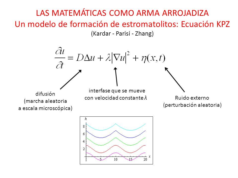 LAS MATEMÁTICAS COMO ARMA ARROJADIZA Un modelo de formación de estromatolitos: Ecuación KPZ (Kardar - Parisi - Zhang) difusión (marcha aleatoria a escala microscópica) Ruido externo (perturbación aleatoria) interfase que se mueve con velocidad constante λ