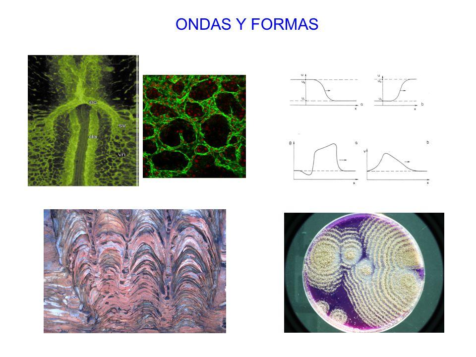 ONDAS Y FORMAS