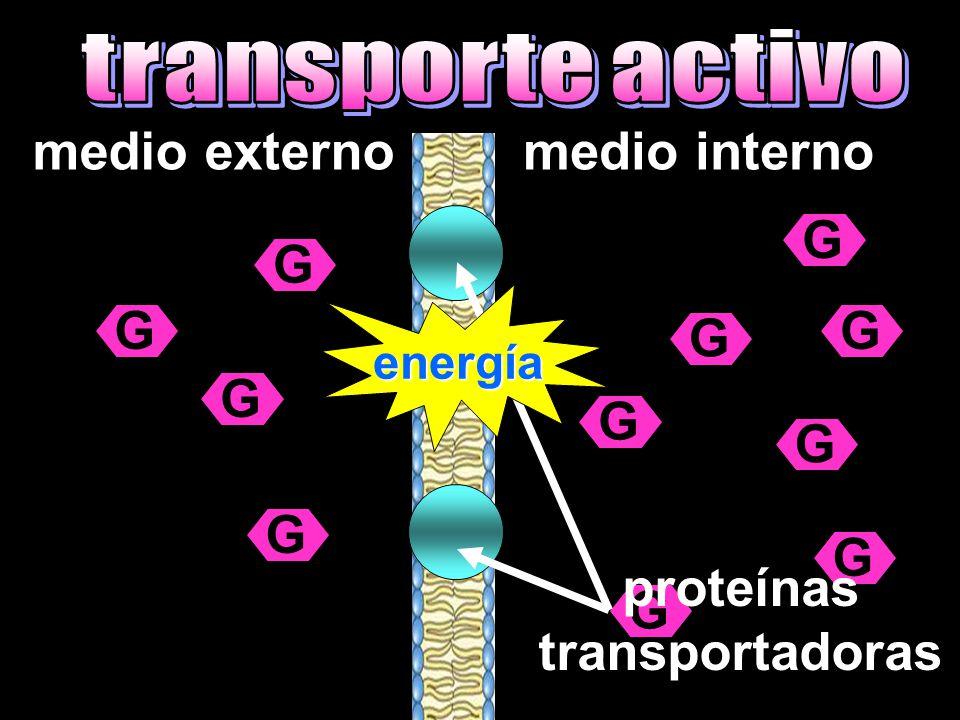 medio externomedio interno G GG G G G G G G G G proteínas transportadoras energía