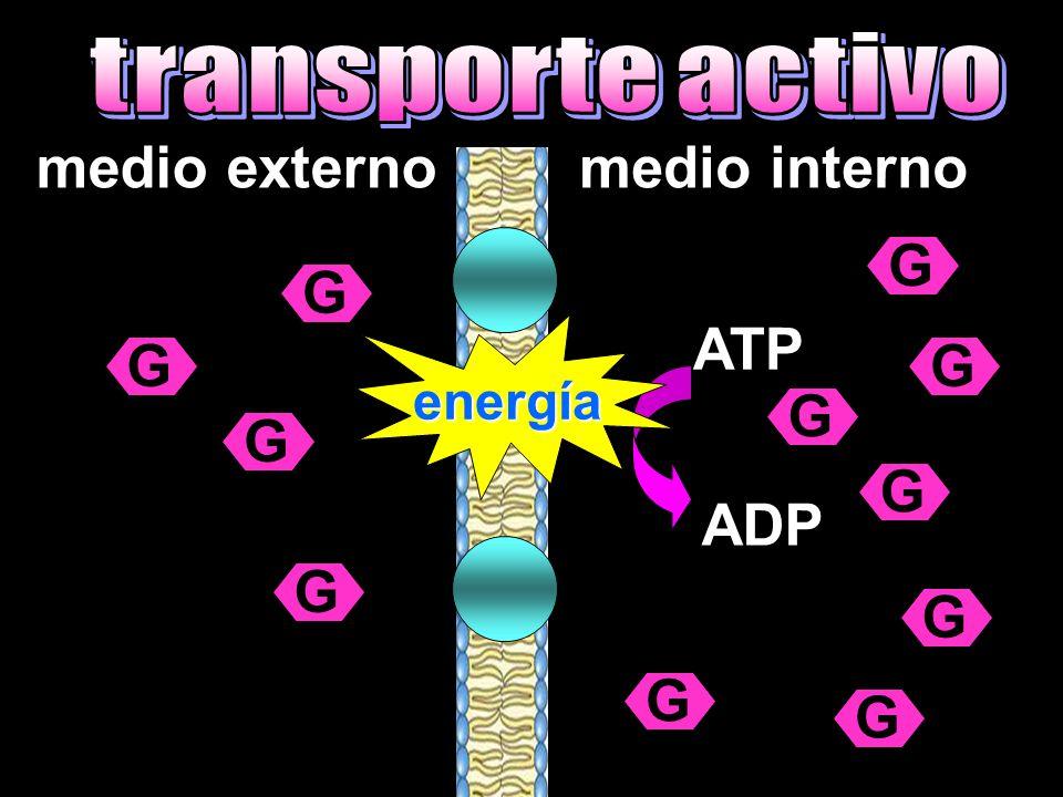 medio externomedio interno G GG G G G G G G G G ATP ADP energía