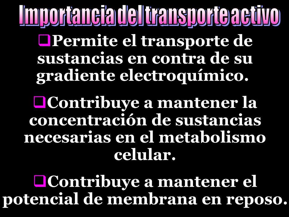 PPermite el transporte de sustancias en contra de su gradiente electroquímico..