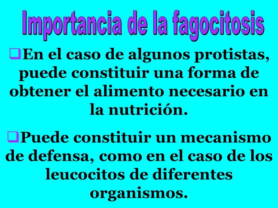 EEn el caso de algunos protistas, puede constituir una forma de obtener el alimento necesario en la nutrición.