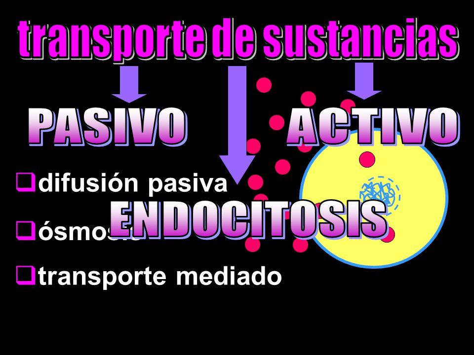  difusión pasiva  ósmosis  transporte mediado
