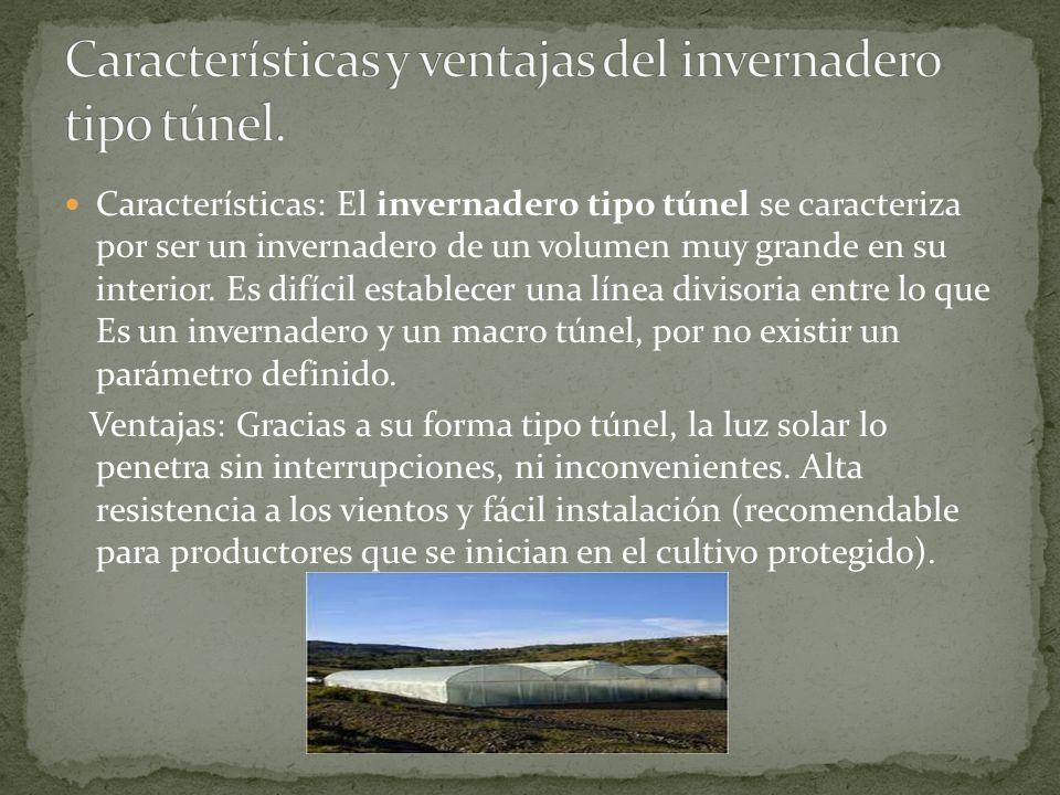 Características: El invernadero tipo túnel se caracteriza por ser un invernadero de un volumen muy grande en su interior.