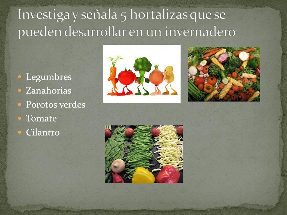 Legumbres Zanahorias Porotos verdes Tomate Cilantro