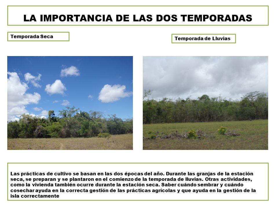 Temporada Seca Temporada de Lluvias LA IMPORTANCIA DE LAS DOS TEMPORADAS Las prácticas de cultivo se basan en las dos épocas del año.