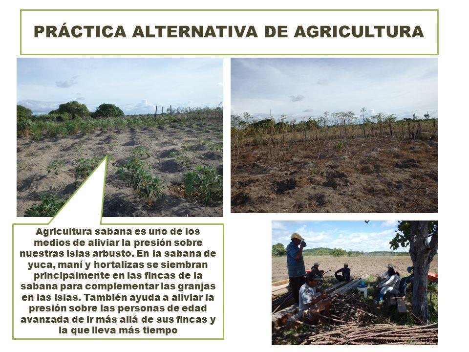PRÁCTICA ALTERNATIVA DE AGRICULTURA Agricultura sabana es uno de los medios de aliviar la presión sobre nuestras islas arbusto.