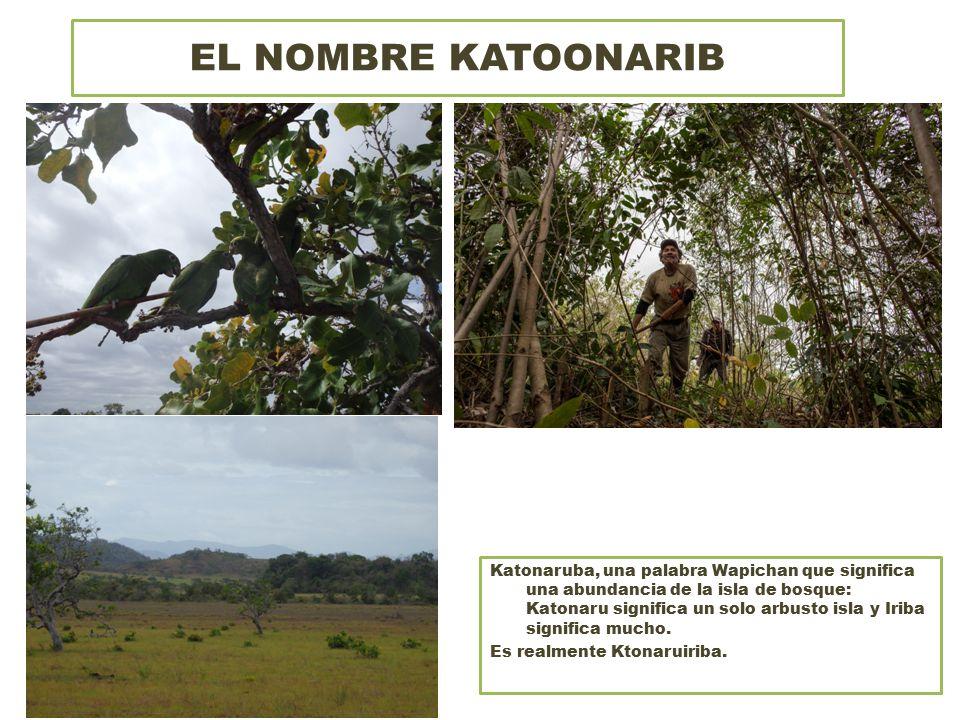EL NOMBRE KATOONARIB Katonaruba, una palabra Wapichan que significa una abundancia de la isla de bosque: Katonaru significa un solo arbusto isla y Iriba significa mucho.