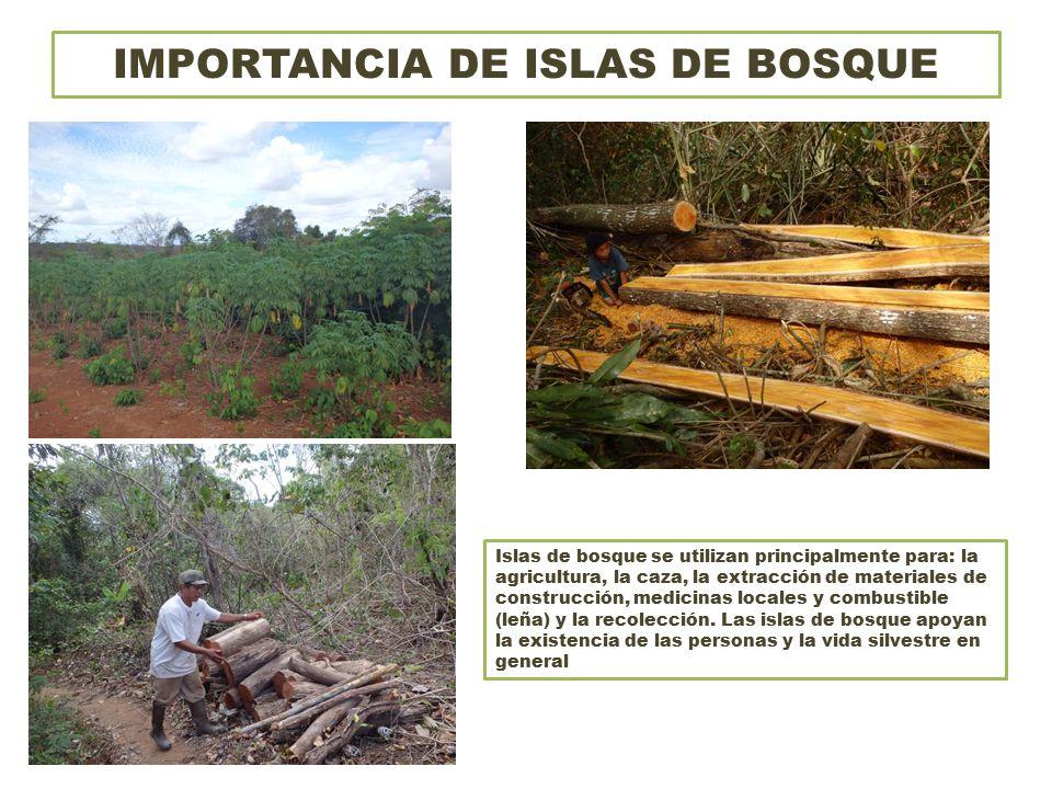 IMPORTANCIA DE ISLAS DE BOSQUE Islas de bosque se utilizan principalmente para: la agricultura, la caza, la extracción de materiales de construcción, medicinas locales y combustible (leña) y la recolección.