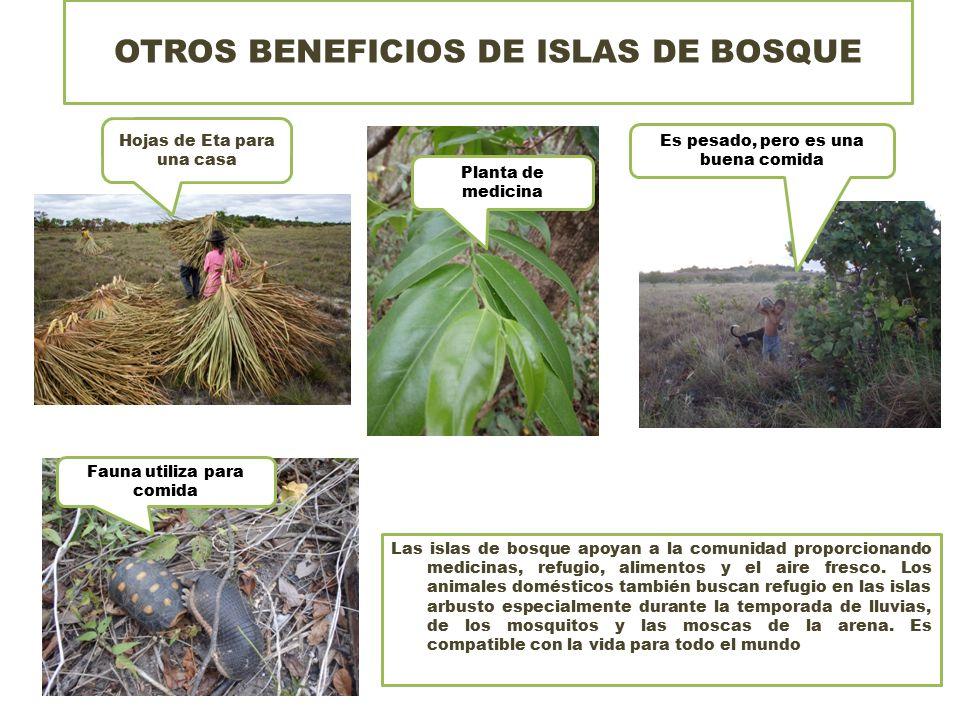 OTROS BENEFICIOS DE ISLAS DE BOSQUE Las islas de bosque apoyan a la comunidad proporcionando medicinas, refugio, alimentos y el aire fresco.