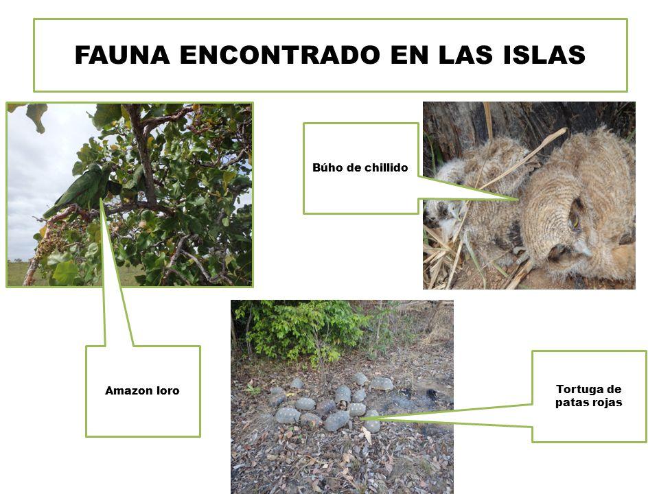 FAUNA ENCONTRADO EN LAS ISLAS Tortuga de patas rojas Amazon loro Búho de chillido