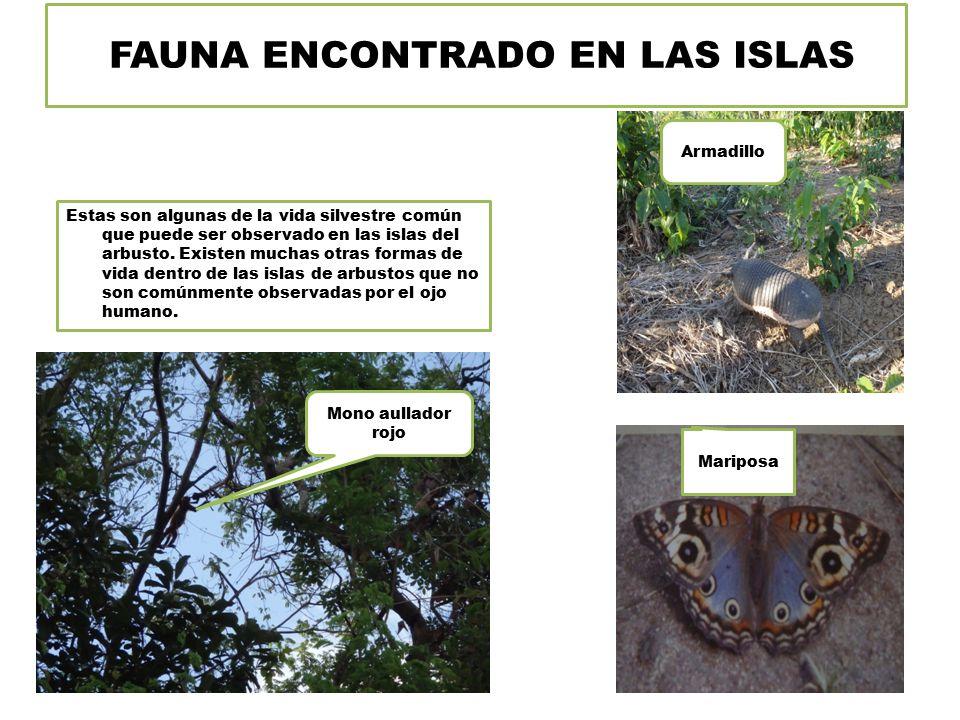 FAUNA ENCONTRADO EN LAS ISLAS Estas son algunas de la vida silvestre común que puede ser observado en las islas del arbusto.