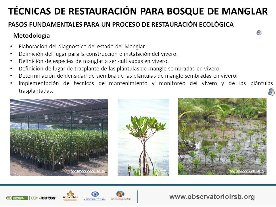 IMPACTOS AMBIENTALES SOBRE LOS MANGLARES DE LOS ARCHIPIÉLAGOS DE ROSARIO Y SAN BERNARDO www.observatorioirsb.org