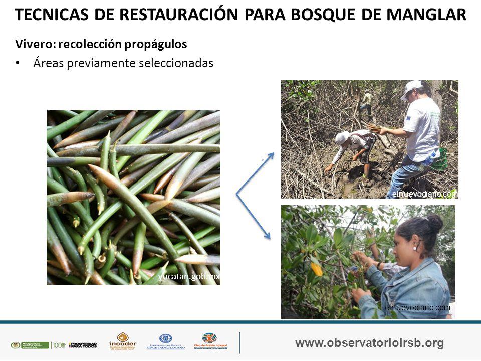 TÉCNICAS DE RESTAURACIÓN PARA BOSQUE DE MANGLAR www.observatorioirsb.org Vivero - Un taller de capacitación a la comunidad sobre la construcción, montaje y mantenimiento del vivero de Bosque de Manglar.