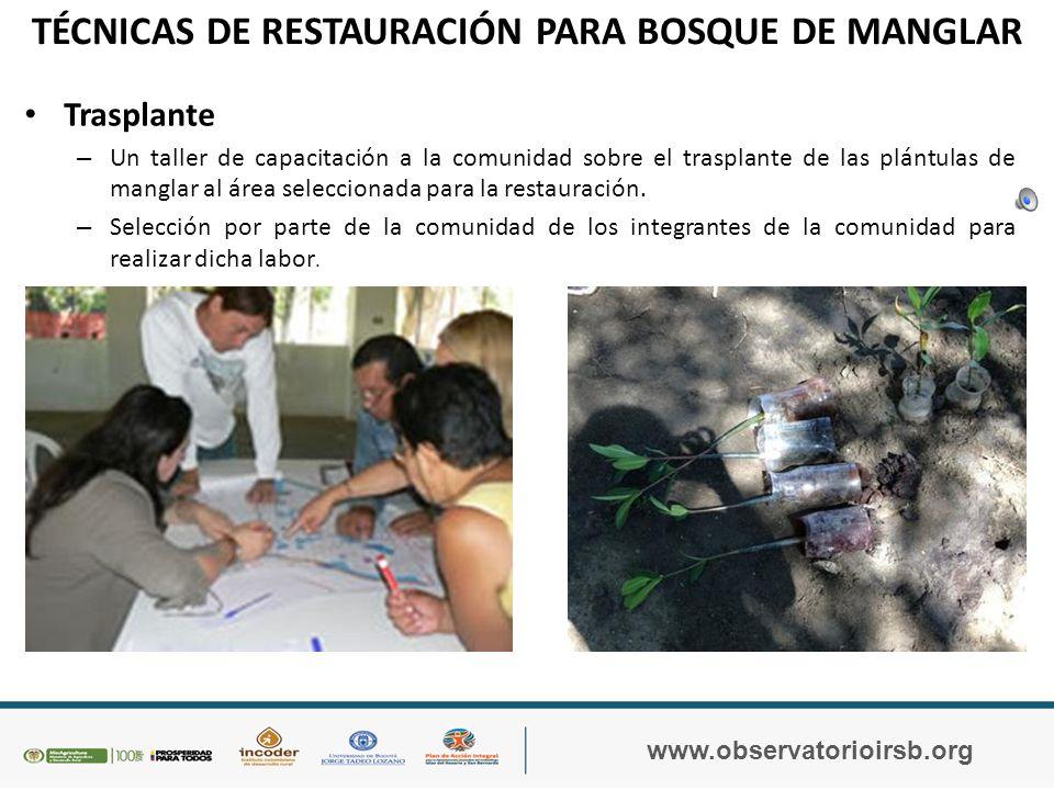 TÉCNICAS DE RESTAURACIÓN PARA BOSQUE DE MANGLAR www.observatorioirsb.org Vivero: mantenimiento uv.mxyucatan.gob.mx