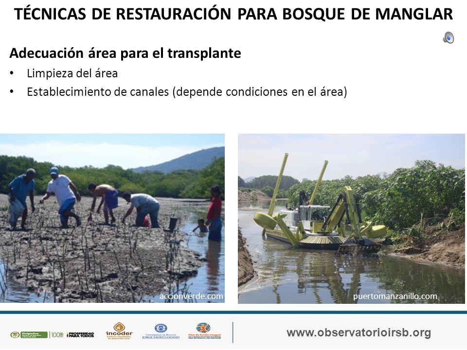 TÉCNICAS DE RESTAURACIÓN PARA BOSQUE DE MANGLAR www.observatorioirsb.org Trasplante – Un taller de capacitación a la comunidad sobre el trasplante de las plántulas de manglar al área seleccionada para la restauración.